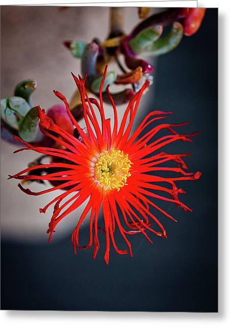 Red Crab Flower Greeting Card