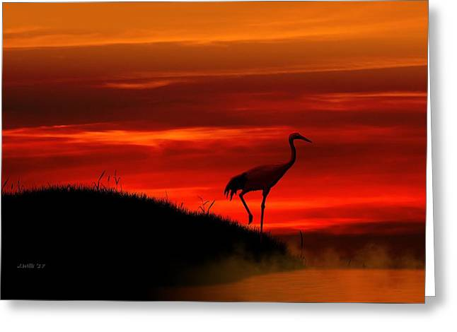 Red Crowned Crane At Dusk Greeting Card by John Wills