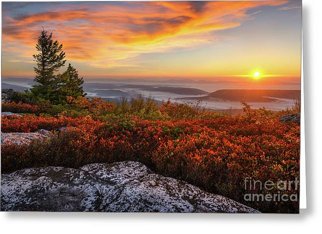 Red Dawn Two Greeting Card by Anthony Heflin