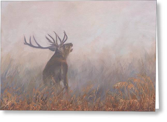 Red Deer Stag Early Morning Greeting Card by David Stribbling
