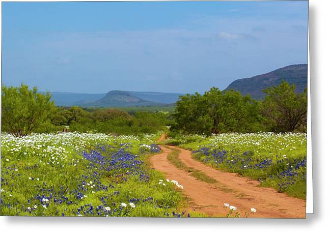 Red Dirt Road With Wild Flowers Greeting Card