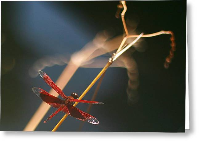 Red Dragonfly Greeting Card by Mike Reid