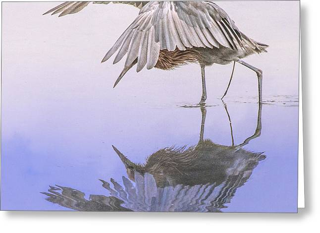 Red Egret Fishing Prance Dance Greeting Card by Leslie Reagan -  Joy To The Wild Photos