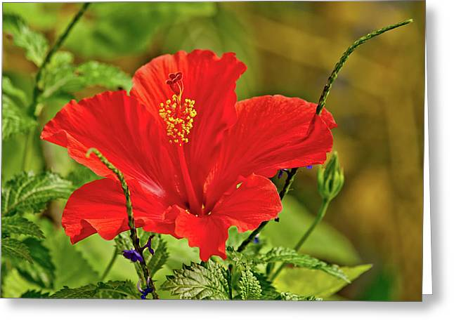 Red Elegance Greeting Card