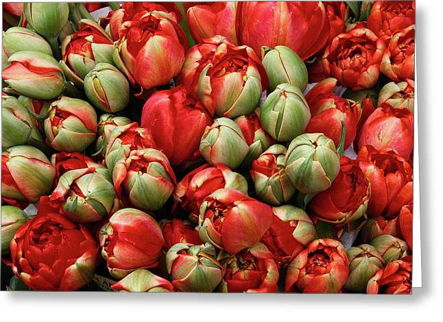 Greeting Card featuring the photograph Red Elegant Blooming Tulips  by Michalakis Ppalis