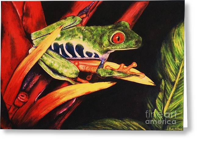 Red Eyed Tree Frog Greeting Card by Jamey Balester