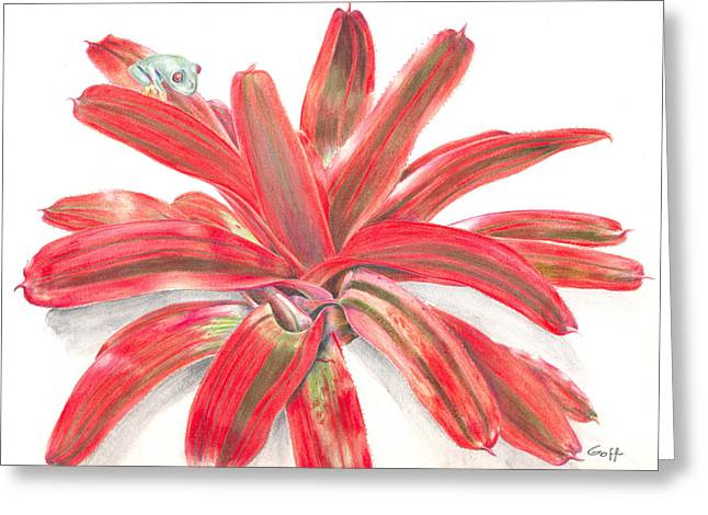Bromeliad Neoregelia Greeting Cards - Red-eyed Tree Frog on Bromeliad Greeting Card by Penrith Goff