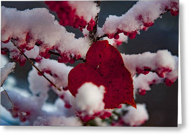 Red Fall Leaf On Snowy Red Berries Greeting Card