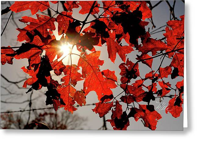 Red Fall Leaves Greeting Card