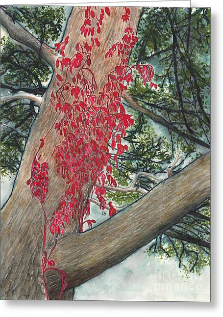 Red Fall Vines On Big Old Tree Greeting Card