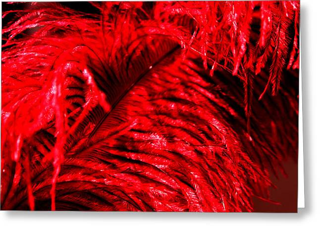 Red Feather Greeting Card by Magdalena Green
