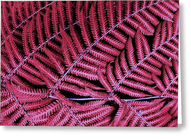 Red Fern Greeting Card