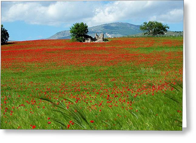 Red Fields Greeting Card by Judy Kirouac