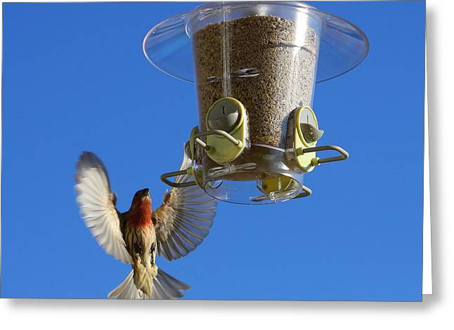 Red Finch And Feeder Greeting Card