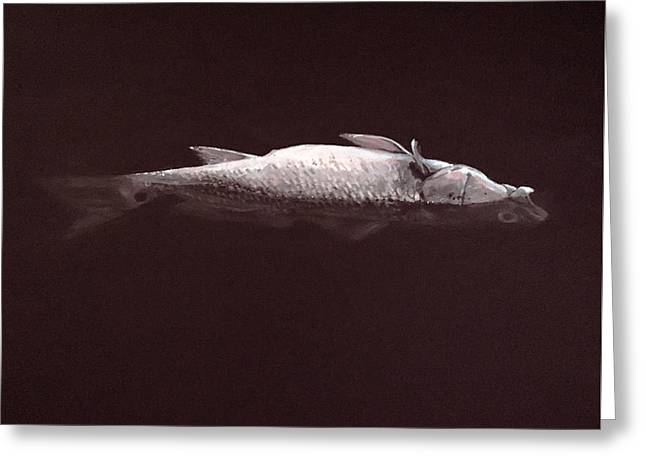 Red Fish Dead Fish Greeting Card by Jeffrey Bess