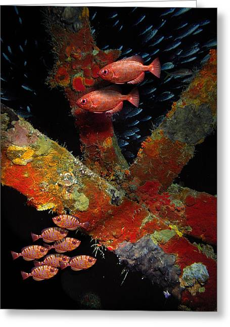 Red Fish On The Rhone Greeting Card
