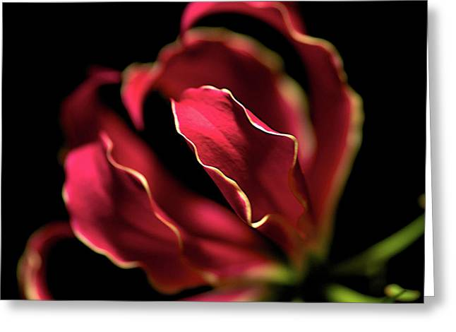 Red Flower 3 Greeting Card by Sheryl Thomas