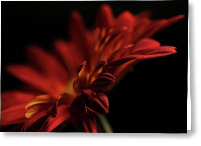 Red Flower 5 Greeting Card by Sheryl Thomas