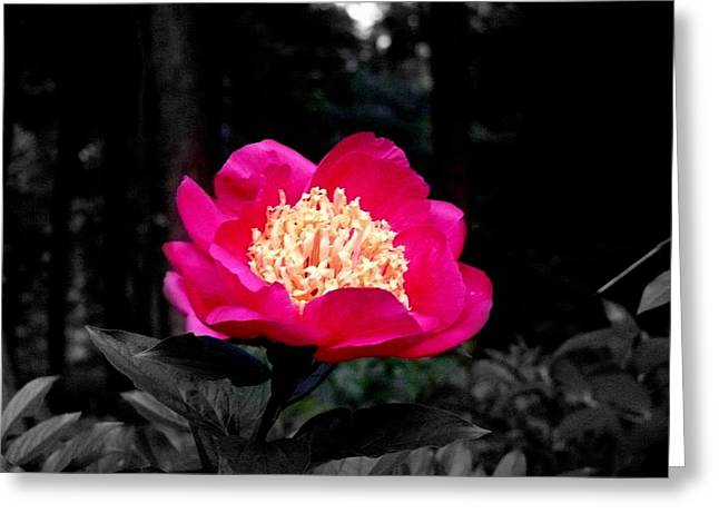 Red Flower Greeting Card by Aron Chervin