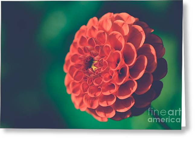 Red Flower Against Greenery Greeting Card
