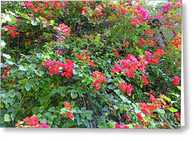 Greeting Card featuring the photograph Red Flower Hedge by Francesca Mackenney