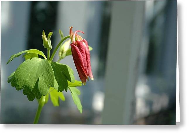 Red Flower Greeting Card by Mark Platt