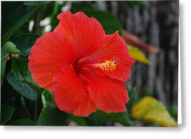 Greeting Card featuring the photograph Red Flower by Rob Hans