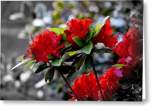 Red Flowers Greeting Card by Aron Chervin