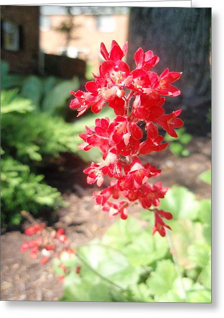 Greeting Card featuring the photograph Red Flowers by Beth Akerman