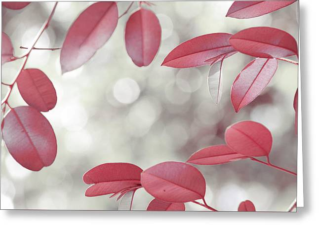 Red Foliage. Silver Light Greeting Card