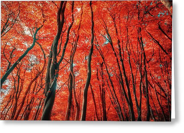 Red Forest Of Sunlight Greeting Card