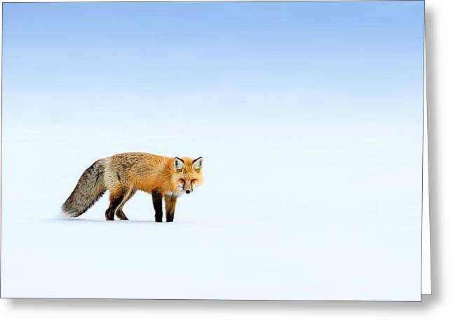 Red Fox Greeting Card by Doug Oglesby