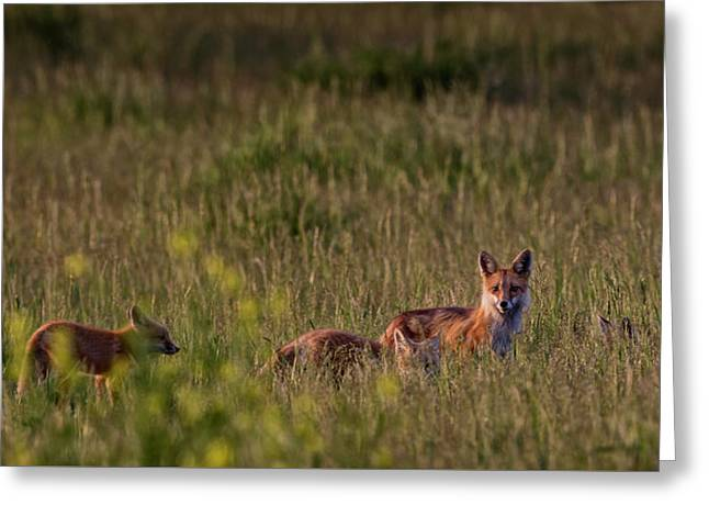 Red Fox Family Greeting Card