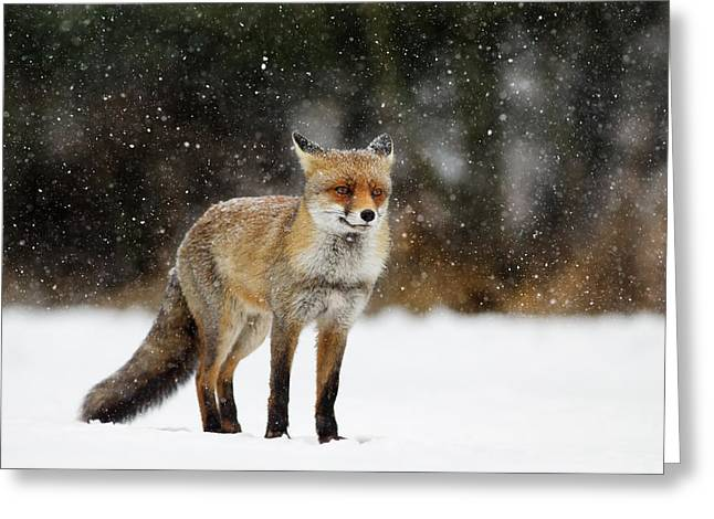Red Fox In A Blizzard Greeting Card by Roeselien Raimond