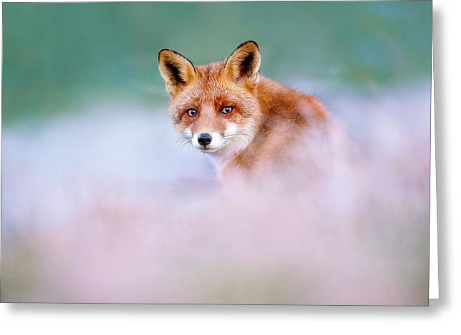 Red Fox In A Mysterious World Greeting Card by Roeselien Raimond