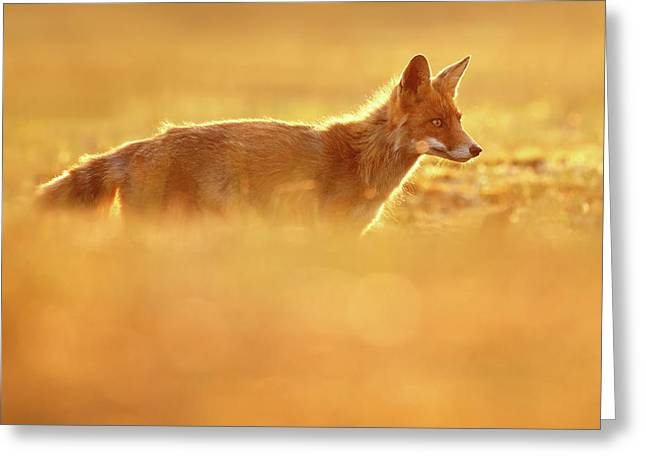 Red Fox In Red Light II Greeting Card by Roeselien Raimond