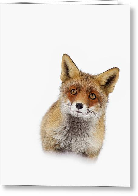 Red Fox In The Snow Portrait Greeting Card