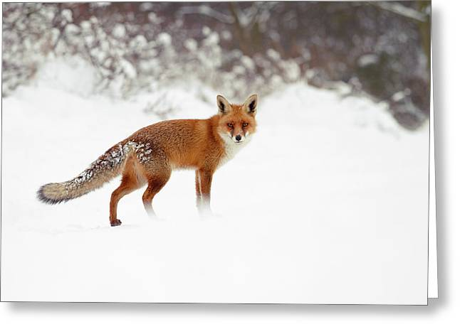 Red Fox In Winter Wonderland Greeting Card by Roeselien Raimond