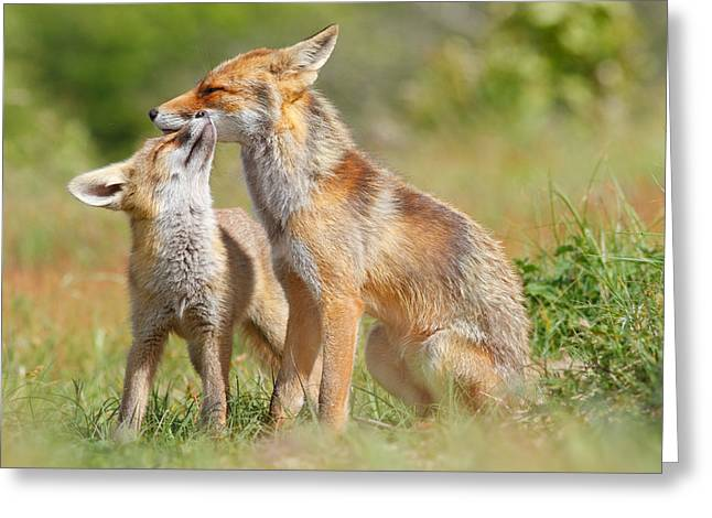 Red Fox Love Greeting Card by Roeselien Raimond