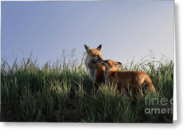 Red Fox Morning Greeting Card