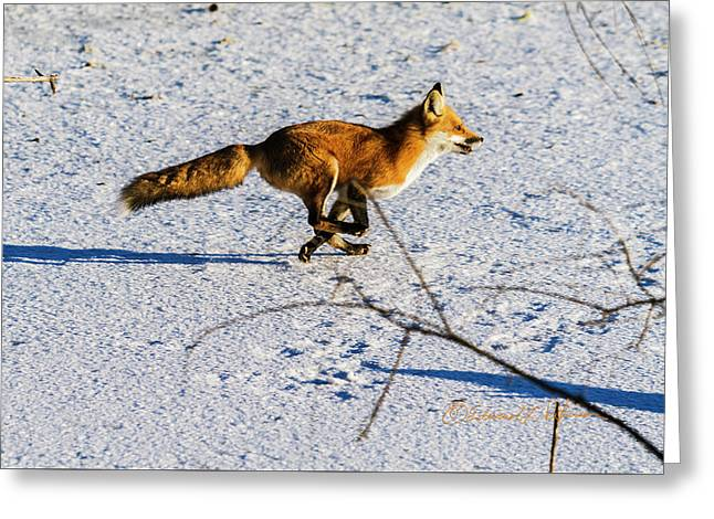 Red Fox On The Run Greeting Card
