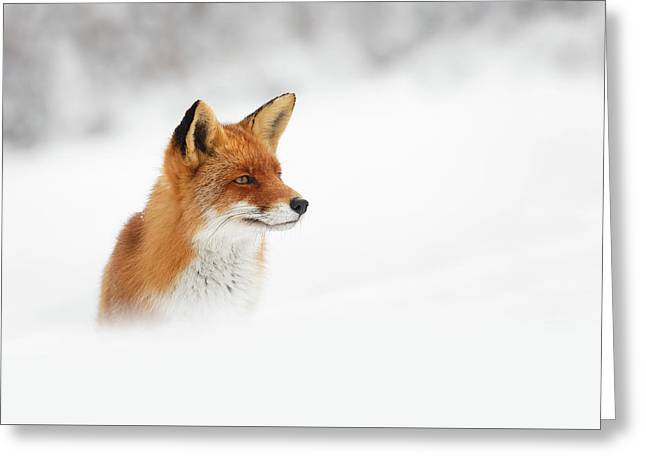 Red Fox Out Of The Blue Greeting Card by Roeselien Raimond
