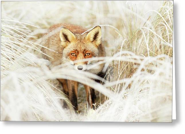 Red Fox Out Of The White Greeting Card by Roeselien Raimond