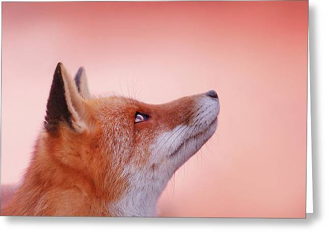 Red Fox, Red Sky Greeting Card