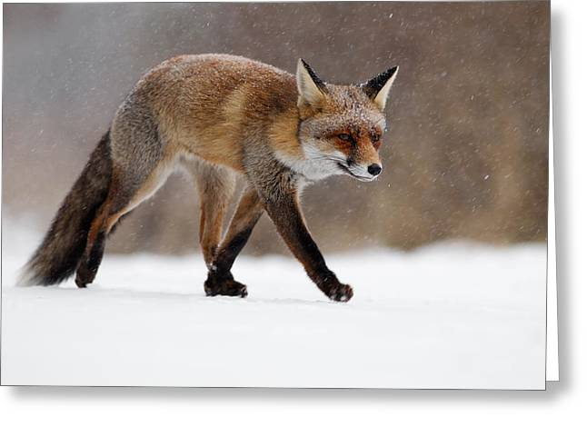 Red Fox  Running Through A Snowshower Greeting Card by Roeselien Raimond