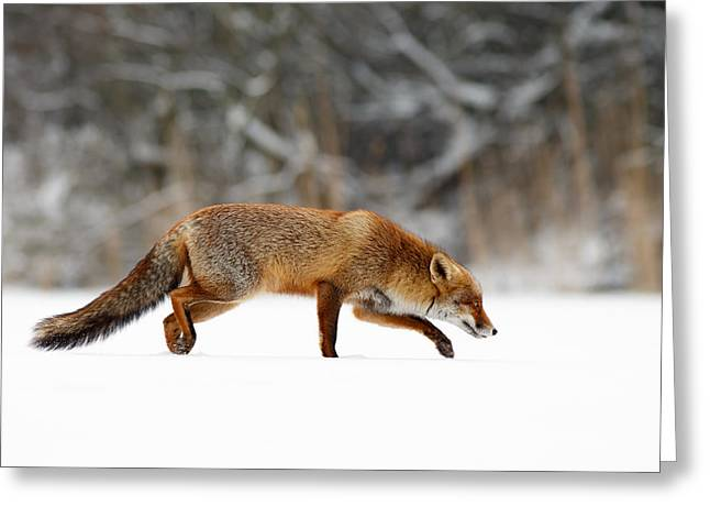 Red Fox Running Through A White World Greeting Card by Roeselien Raimond