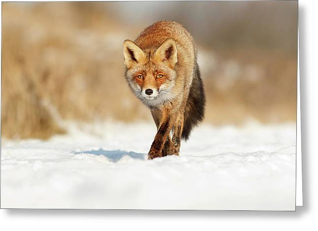 Red Fox Walking Through A Snow Landscape Greeting Card by Roeselien Raimond