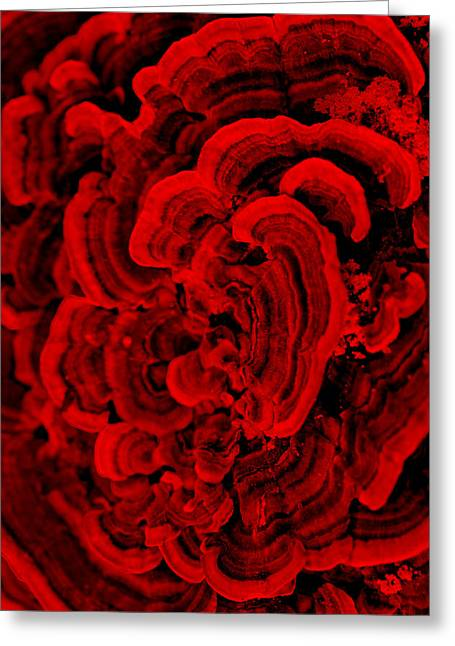 Red Fungi Greeting Card by Dana  Oliver