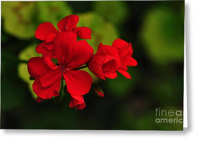 Red Geranium Greeting Card by Kaye Menner