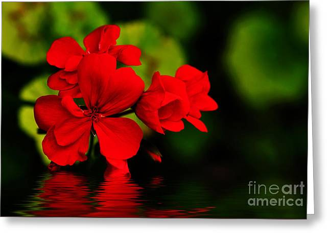 Red Geranium On Water Greeting Card by Kaye Menner